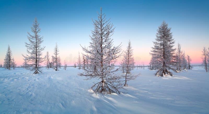 Χειμερινό τοπίο με τα χιονισμένα δέντρα στοκ φωτογραφίες