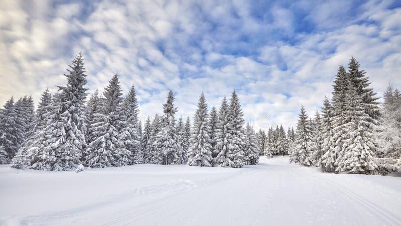 Χειμερινό τοπίο με τα χιονισμένα δέντρα στοκ εικόνες