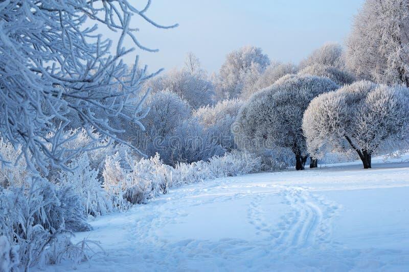 Χειμερινό τοπίο με τις ιτιές και τις εγκαταστάσεις στοκ φωτογραφία
