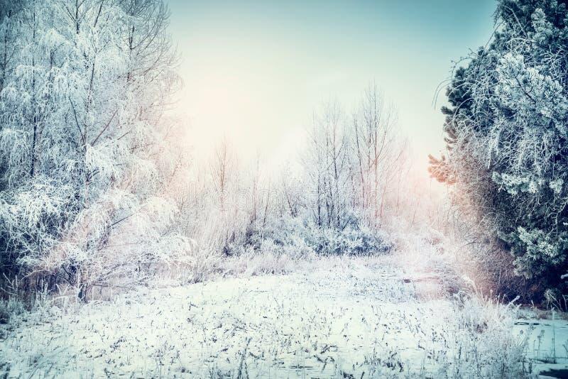 Χειμερινό τοπίο με το χιόνι, τον τομέα, τα δέντρα και τις παγωμένες χλόες στοκ εικόνα