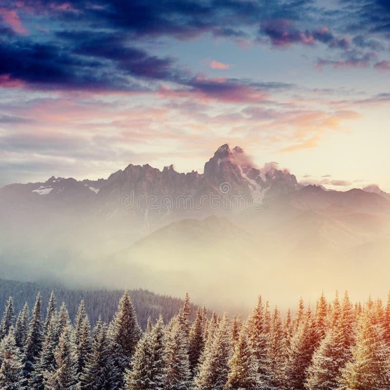 Χειμερινό τοπίο που καίγεται από το φως του ήλιου Δραματική χειμερινή σκηνή στοκ φωτογραφία