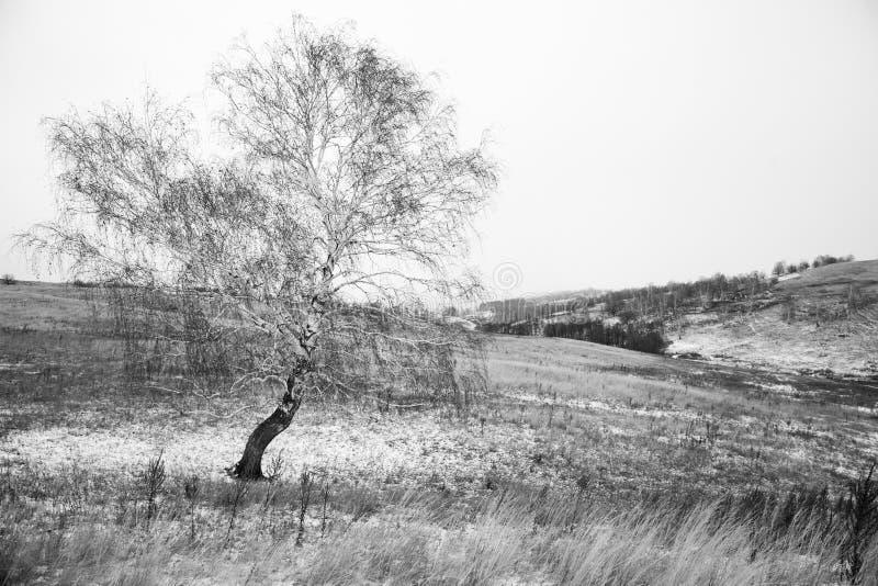 Χειμερινό τοπίο, σημύδα, παγετός, χιόνι στοκ φωτογραφίες με δικαίωμα ελεύθερης χρήσης