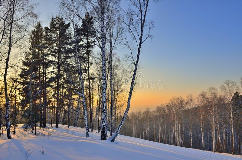 Χειμερινό τοπίο στο δάσος στο ηλιοβασίλεμα στοκ φωτογραφία με δικαίωμα ελεύθερης χρήσης