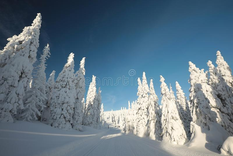 Χειμερινό τοπίο το πρωί στοκ φωτογραφίες
