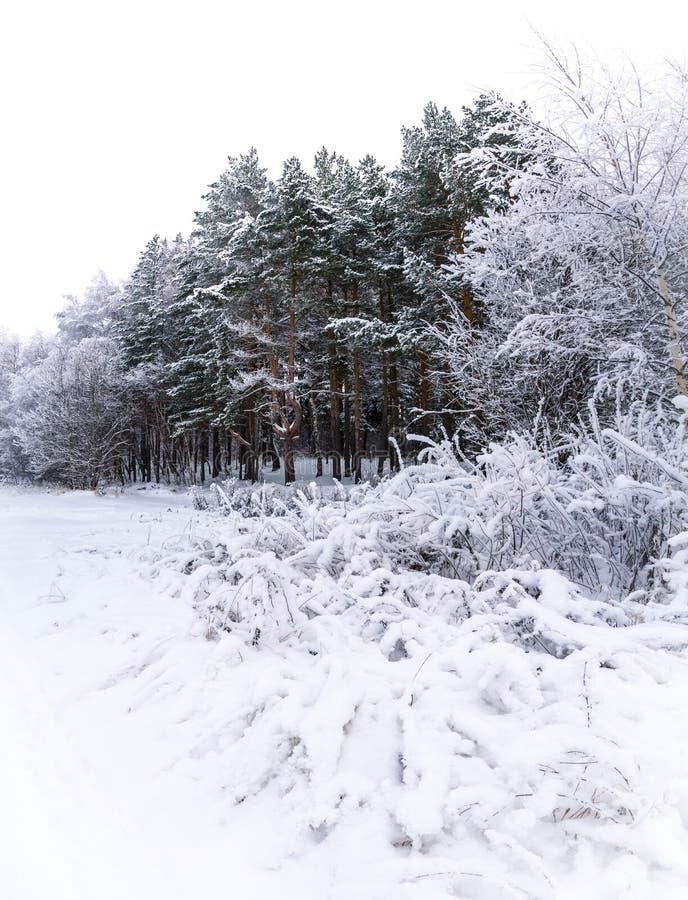 Χειμερινό τοπίο φωτός της ημέρας με το χιονώδες δάσος στοκ φωτογραφία με δικαίωμα ελεύθερης χρήσης
