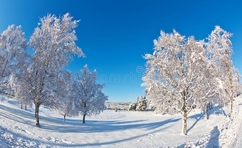 Χειμερινό τοπίο στοκ εικόνα