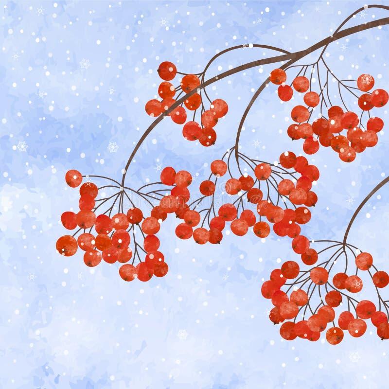 Χειμερινό υπόβαθρο με το μούρο σορβιών κλάδων ελεύθερη απεικόνιση δικαιώματος