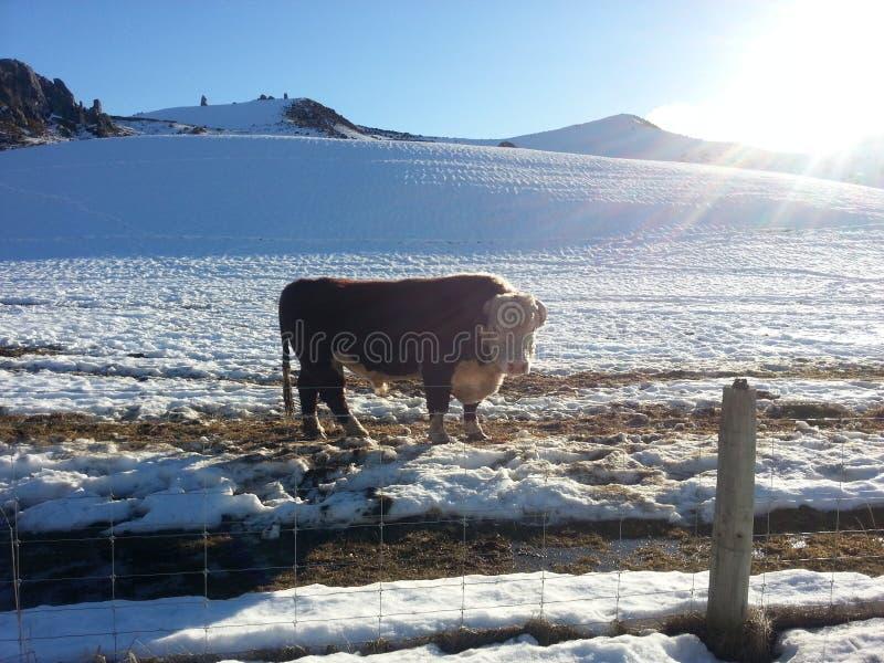 Χειμερινό χιόνι στοκ φωτογραφία με δικαίωμα ελεύθερης χρήσης
