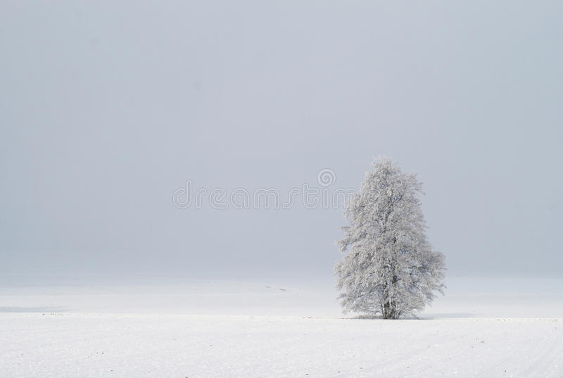 χειμώνας δέντρων εικόνας σχεδίου στοκ εικόνα