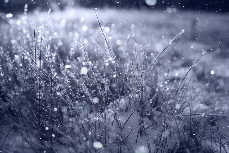 χειμώνας δέντρων τοπίων Χριστουγέννων noel στοκ εικόνες με δικαίωμα ελεύθερης χρήσης