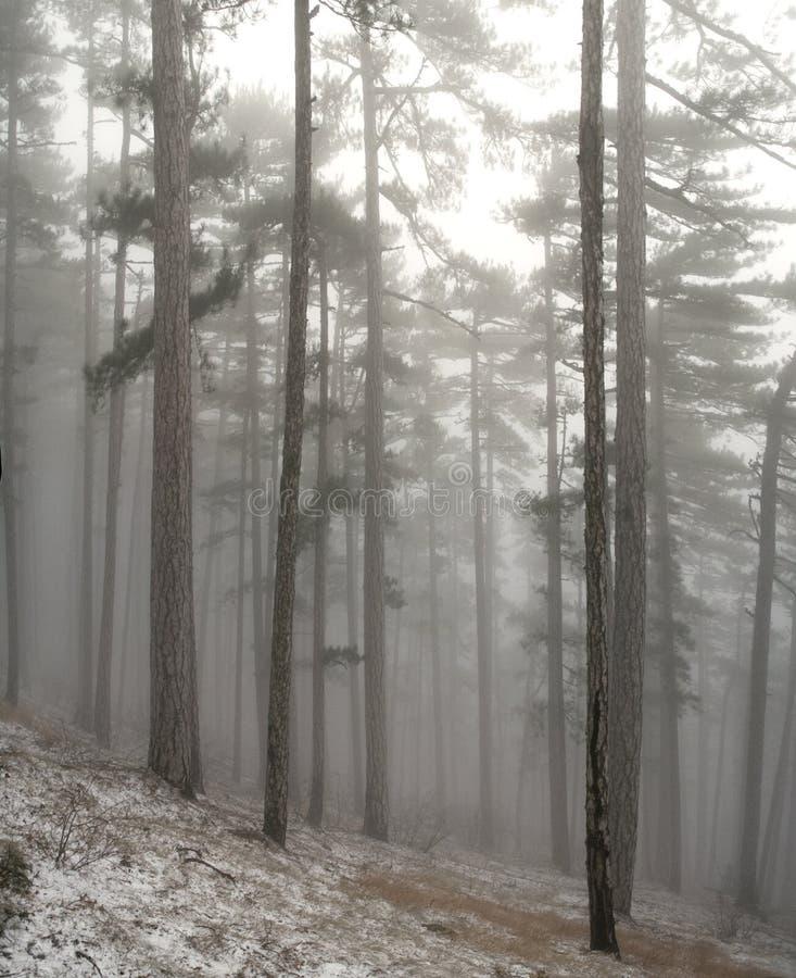 Download χειμώνας δέντρων βουνών στοκ εικόνες. εικόνα από έλατο - 17053070