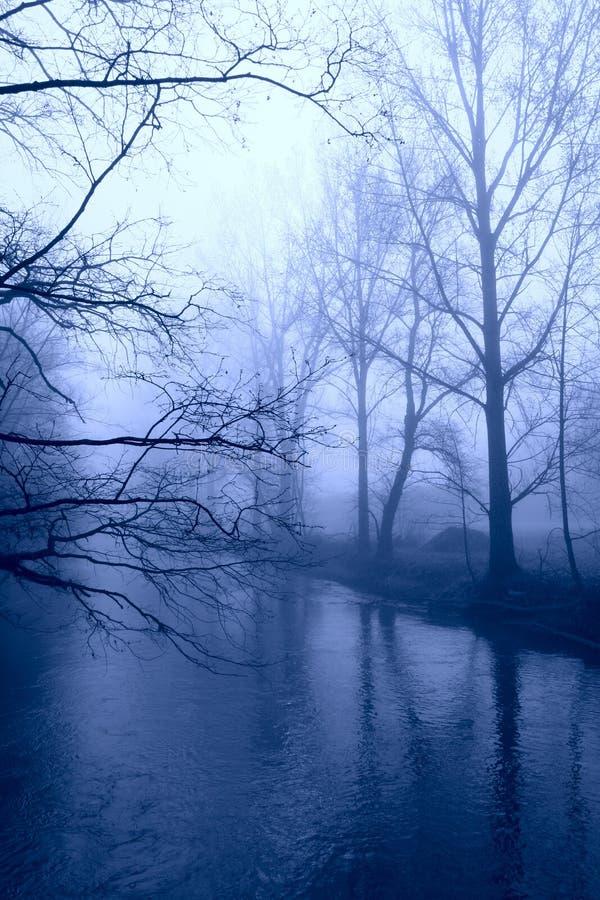 χειμώνας δέντρων ομίχλης στοκ φωτογραφίες