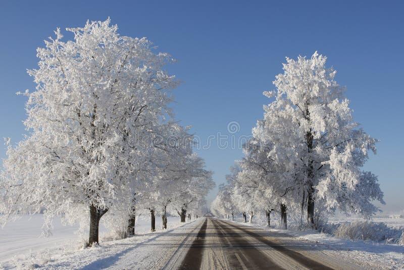 χειμώνας δέντρων σκηνής στοκ φωτογραφία