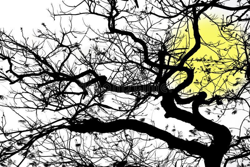χειμώνας δέντρων απεικόνιση αποθεμάτων