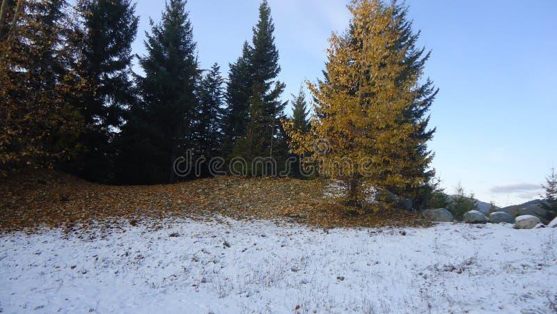 χειμώνας εποχής τοπίων ωρών στοκ εικόνα