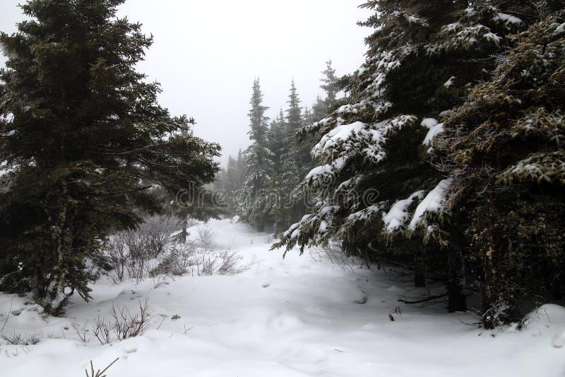 χειμώνας ιχνών στοκ φωτογραφία