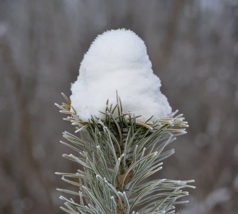 Χειμώνας - κατάπληξη φύσης στοκ φωτογραφία