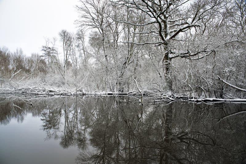 χειμώνας λιμνών στοκ φωτογραφία