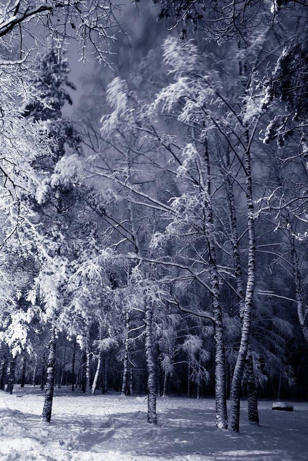 χειμώνας νύχτας τοπίων στοκ φωτογραφία με δικαίωμα ελεύθερης χρήσης