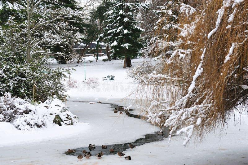 χειμώνας πάρκων λόφων αναγν& στοκ εικόνες