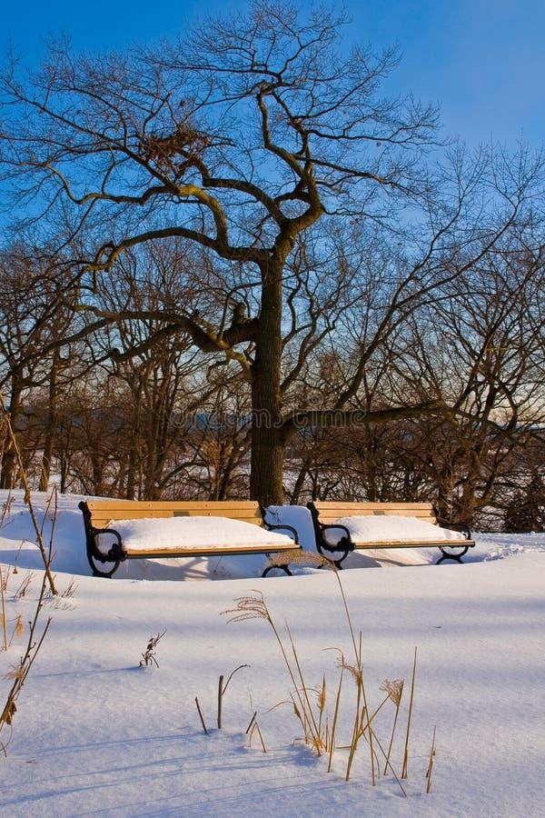 χειμώνας πάρκων στοκ εικόνες