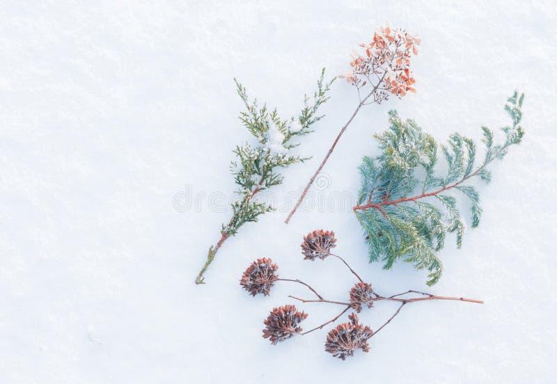 Χειμώνας - παγωμένες εγκαταστάσεις στο φυσικό υπόβαθρο χιονιού στοκ εικόνες