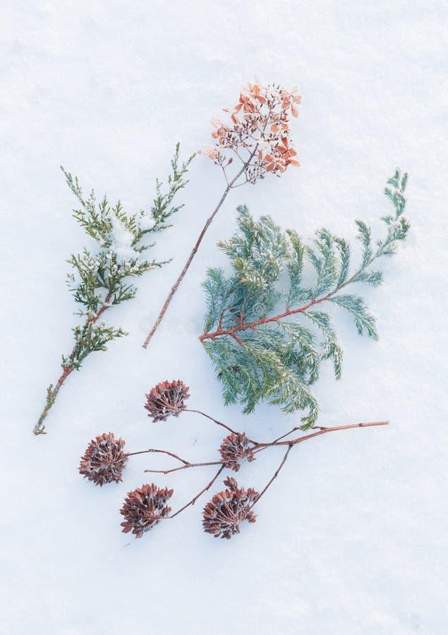 Χειμώνας - παγωμένες εγκαταστάσεις στο φυσικό υπόβαθρο χιονιού στοκ φωτογραφία