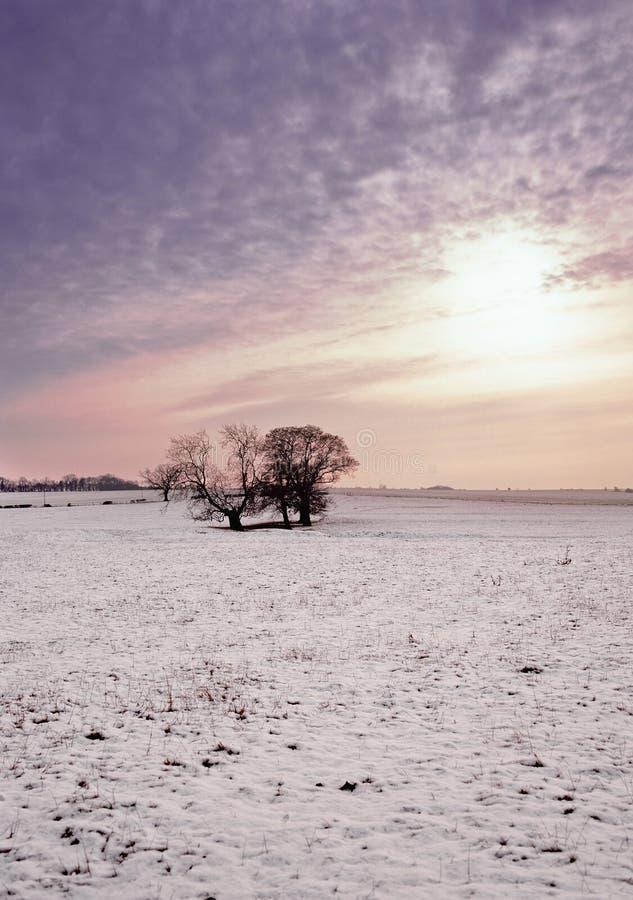χειμώνας πεδίων στοκ φωτογραφίες με δικαίωμα ελεύθερης χρήσης