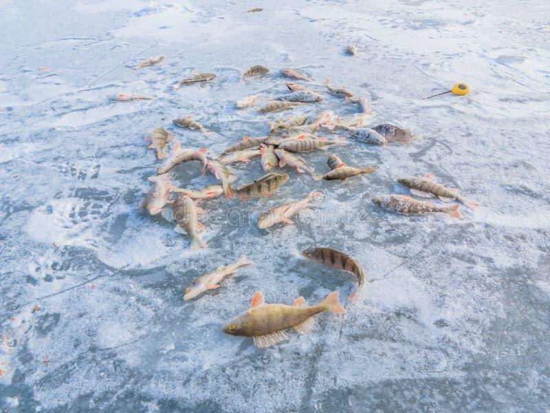 Χειμώνας που αλιεύει στον πάγο στοκ εικόνα