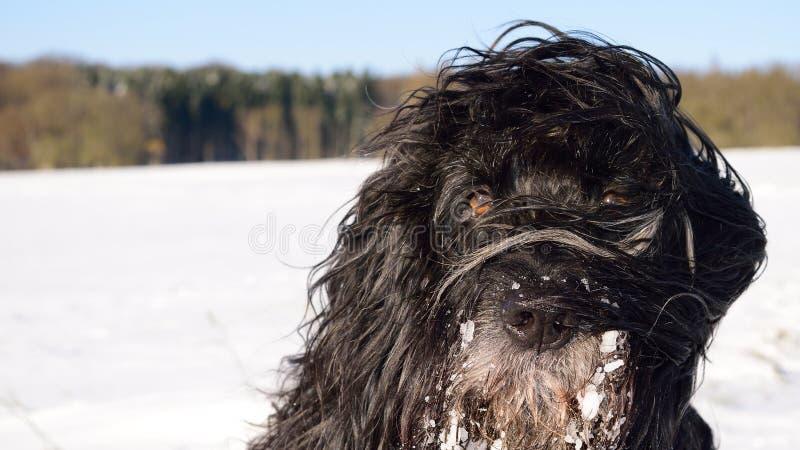 Χειμώνας 1 σκυλιών στοκ εικόνες