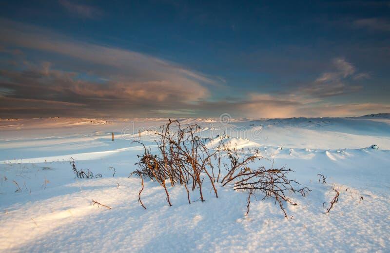 Χειμώνας στην Ισλανδία στοκ εικόνα