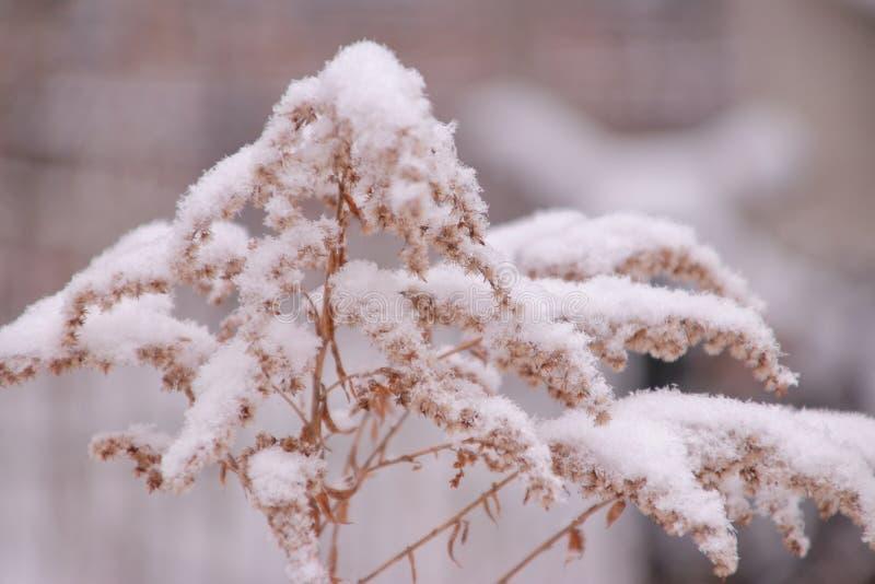 Χειμώνας στην ψυχή στοκ εικόνες