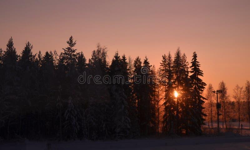 Χειμώνας στη Φινλανδία, ηλιοβασίλεμα, δέντρα, στοκ εικόνες