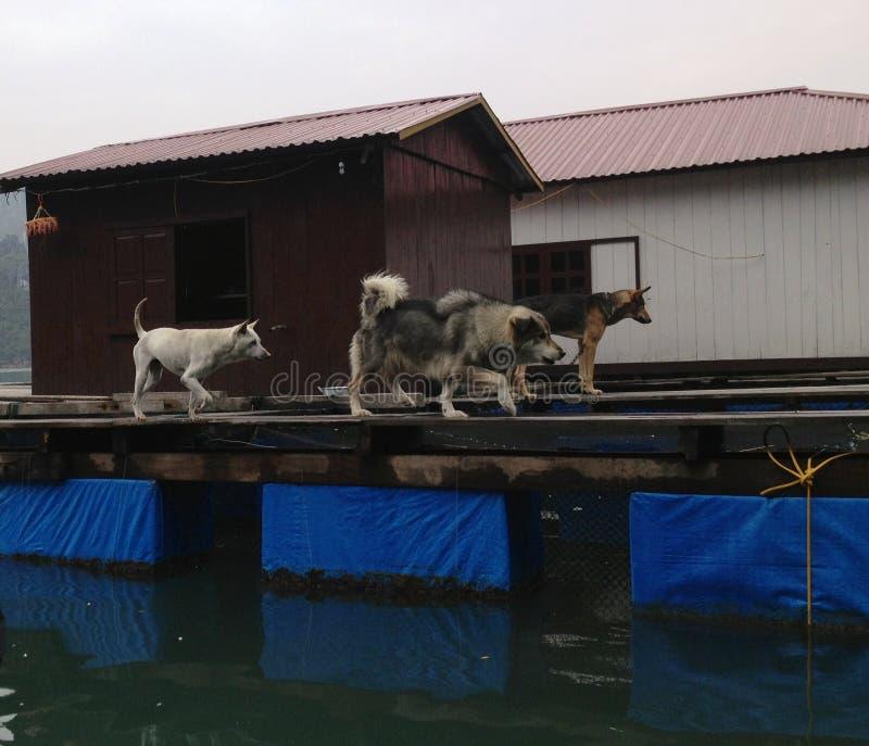 Χειμώνας στον κόλπο Halong, Βιετνάμ, Ασία στοκ φωτογραφία