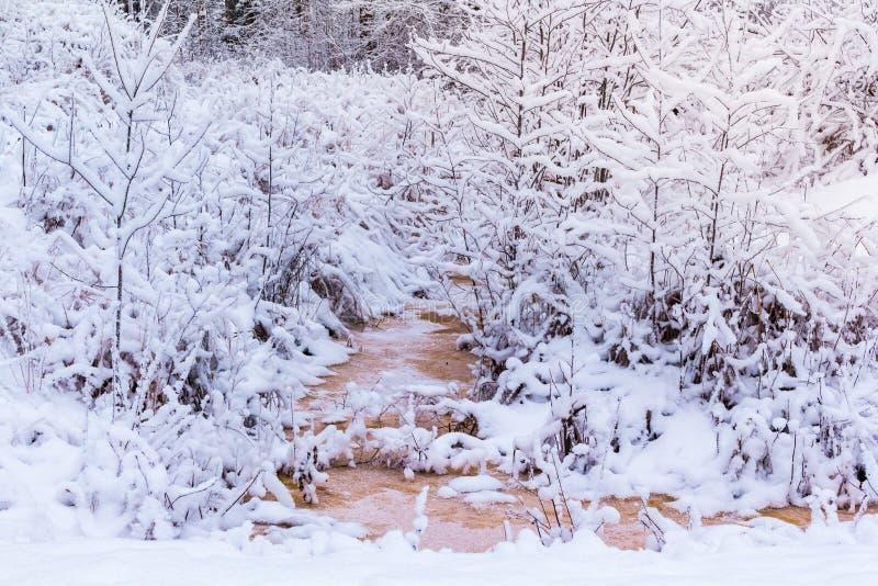 Χειμώνας στο δάσος στοκ φωτογραφία
