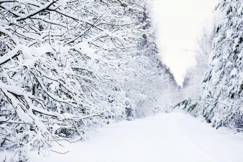 Χειμώνας στο δάσος στοκ φωτογραφία με δικαίωμα ελεύθερης χρήσης