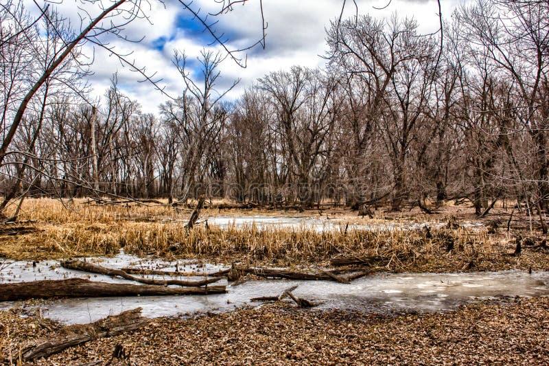 Χειμώνας στο έλος στοκ φωτογραφία με δικαίωμα ελεύθερης χρήσης
