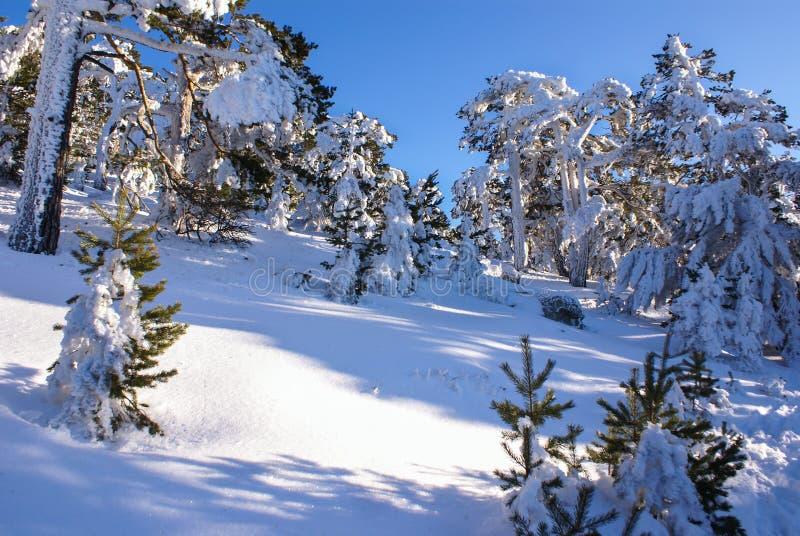 Χειμώνας στο βουνό navacerrada Μαδρίτη, Ισπανία, στοκ φωτογραφίες