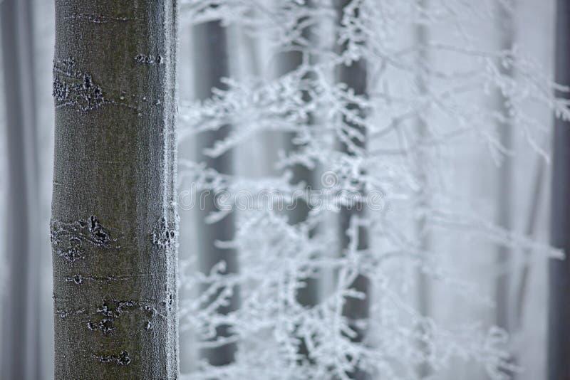 Χειμώνας στο δάσος, δέντρα με την πάχνη Pf λεπτομέρειας χιονιού δασικό μπλε και άσπρο χειμερινό τοπίο στο τσεχικό δέντρο οξιών Ξύ στοκ εικόνες με δικαίωμα ελεύθερης χρήσης
