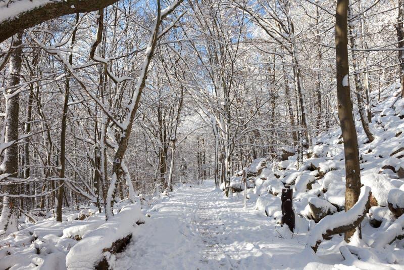 χειμώνας της Γερμανίας στοκ εικόνα με δικαίωμα ελεύθερης χρήσης