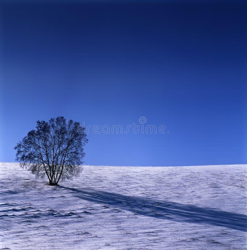 χειμώνας τοπίου λιβαδιών στοκ φωτογραφία με δικαίωμα ελεύθερης χρήσης