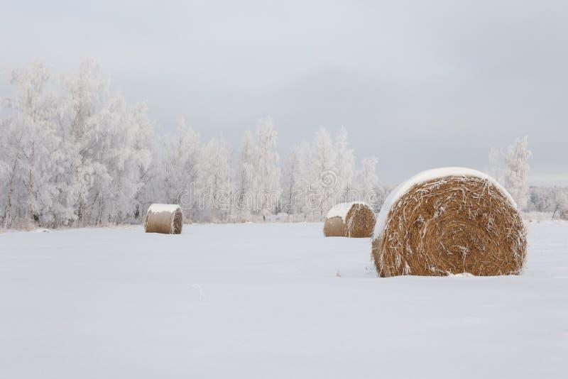 χειμώνας τοπίων παγετού στοκ εικόνες