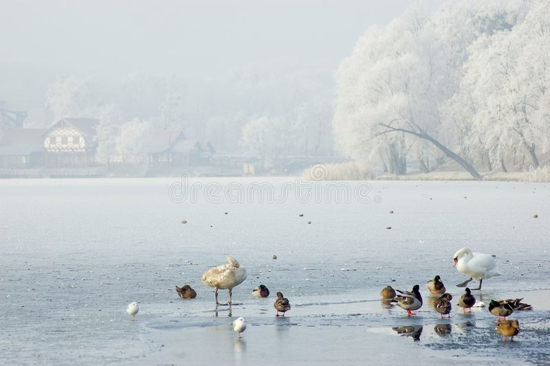 χειμώνας τοπίων πουλιών στοκ εικόνα με δικαίωμα ελεύθερης χρήσης