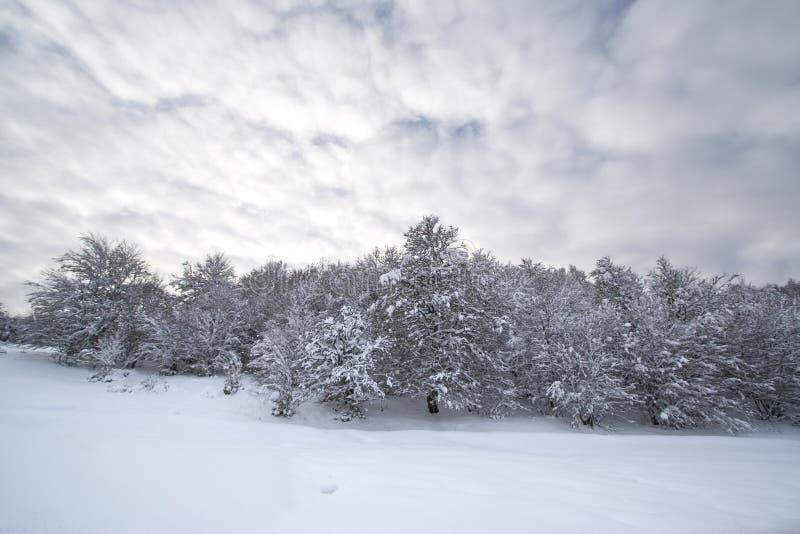 χειμώνας τοπίων Χριστουγέννων στοκ εικόνα