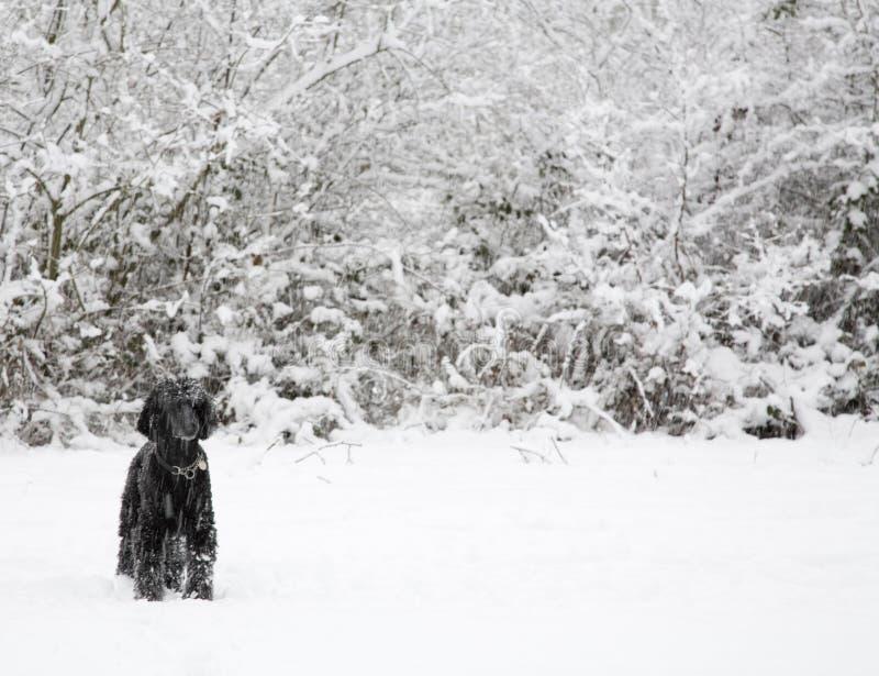 χειμώνας χιονιού σκυλιών στοκ φωτογραφία