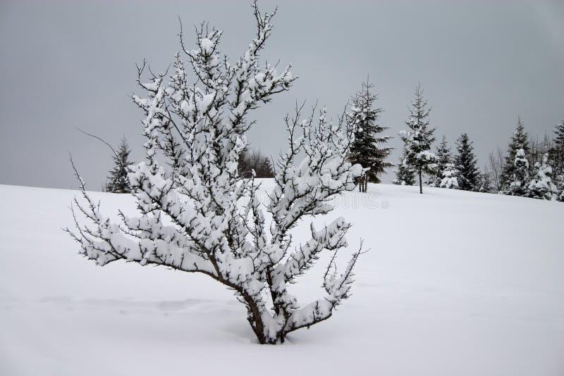 Download χειμώνας χιονιού στοκ εικόνες. εικόνα από δέντρα, εποχή - 1548930