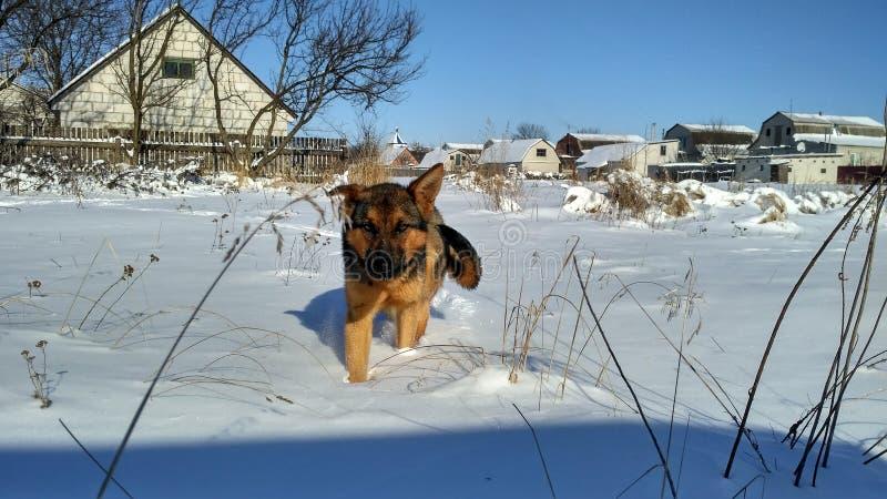 Χειμώνας χιόνι ηλιόλουστος Σκυλί στοκ εικόνες με δικαίωμα ελεύθερης χρήσης