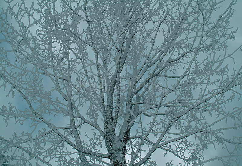 Download χειμώνας στοκ εικόνες. εικόνα από φύση, κρύο, φυσικός, χιονώδης - 119524