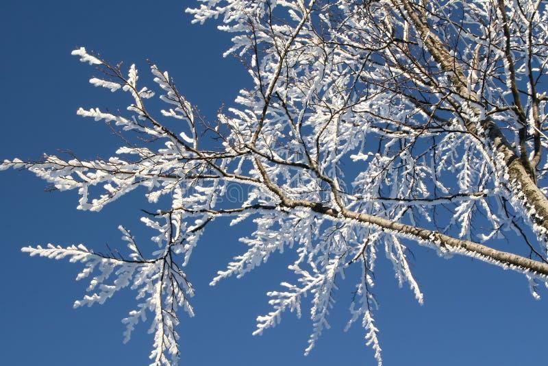 Download χειμώνας στοκ εικόνες. εικόνα από κρύσταλλο, χειμώνας - 13185842