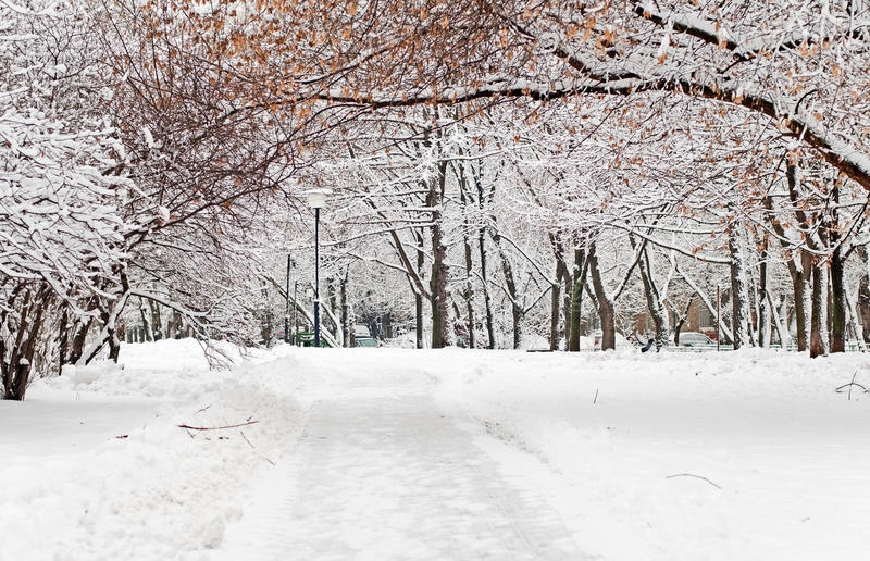 Download χειμώνας στοκ εικόνα. εικόνα από φυσικός, δάσος, περπάτημα - 22775309